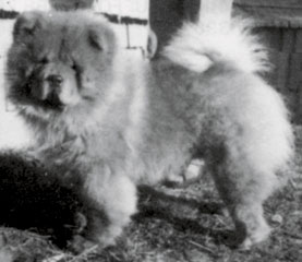 The Chow Chow Club - Since 1895 (|)